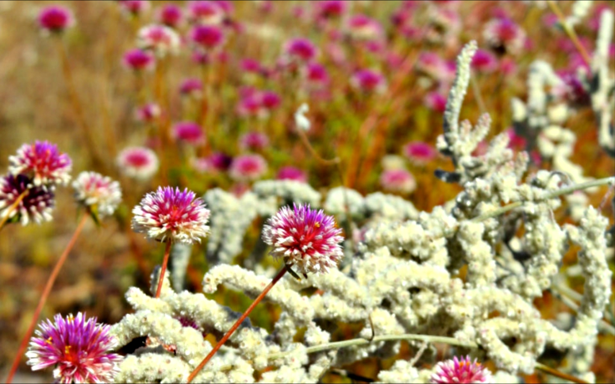 covid wildflowers - The 900km commute with COVID